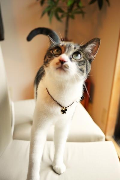 ペットモデル 猫 テトラ i-an.jpg